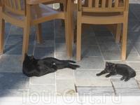 Ну какие же там классные кошки :)