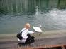 В Люцерне очень много лебедей и они совсем не боятся людей