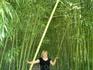Бамбуковая роща в Адлере