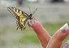 Редкая бабочка в нашем путешествии на базу Энергетик
