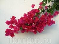 Как называются эти цветы, не знаю. Но красивые!