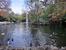 И еще одно красивейшее место - пруд. В центре пруда - фонтан, в пруду плавают утки и лебеди.