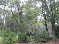 Sudfriedhof. Вековые деревья, поросшие мхом... очень карсиво...