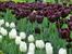 К началу XIX века Королевский ботанический сад превратился в один из лучших ботанических садов Европы. Его руководителем в это время был Antonio José Cavanilles y Palop - выдающийся ученый своего врем
