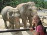 Зоопарк Кхао Кхео - слоники презабавные и умные.