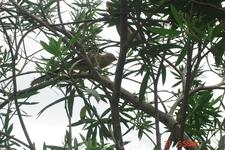 Везде, где есть деревья, обязательно есть птицы
