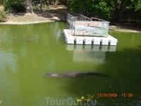 Еще крокодил...