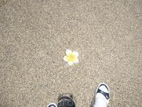 Храм Ват Чалонг. Керамические цветочки прям на тратуаре