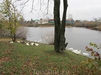 На другой стороне пруда жилые дома д.Ивановка. Скоро гуси поплывут домой.