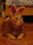 наш кото-кроллег желает Вам удачи в этом году