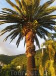 Одна из пальм, а их там много видов и все разные. Нет двух одинаковых!