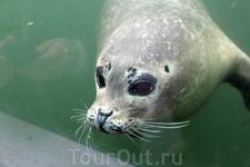 А этот чудный тюлень все время плавал у огромных панорамных стекол вольера и заигрывал с посетителями.