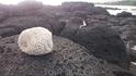 И вот такой большой коралл волна приесла на камни