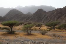 Выжженые солнцем деревья, и размытое небо-последствия песчанной бури
