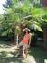 пальма у входа в наш отель