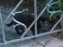 единственный кот на территории собора,которого увидела в Мюнхене!