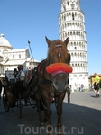 Все мы немножко лошади, особенно в Пизе