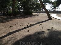 попугаи на пляже Санта Понсы