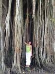 Дерево возрастом как и Чанди Мендут