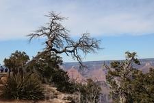 Растительность Гранд-Каньона