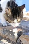 Агиос-Николаос. Местные котейки тоже не прочь охладиться мороженым.