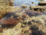 Jemchiujina voda Okeana, Portimao