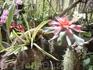 В музее орхидей.