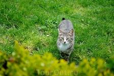 Стамбульский котик