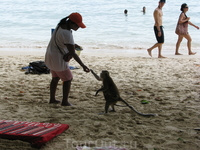 Monkey на Pra Nang