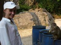 один из туристов отдал обезъянке стаканчик мороженного с ложечкой. Она молодец - знает зачем ложка, ей и ела.