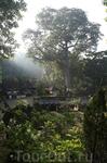 """В джунглях, возле храма """"Слоновьи пещеры"""""""