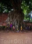 каменная голова будды поднимается деревом от земли