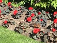 Как видите, по парку бегают совершенно непуганные белки! И лопают цветы с президентских клумб))