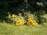 даже цветы склоняют голову перед павшими героями