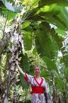 банан (плантация специй)