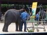 Тропический парк Нонг Нуч. Шоу слонов.