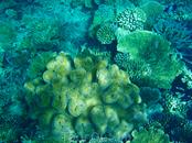 Подводный мир-мягкие кораллы