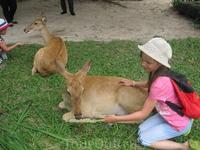 Зоопарк Кхао Кхео - животные совсем ручные.