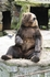 Бурый медведь. Звезды зоопарка. Возле их вольера больше всего народа. Сама лично пропала около них на час