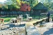 Открытые вольеры зоопарка. Ламы