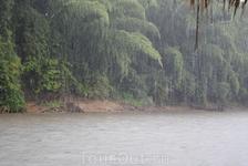 Тропический дождь!