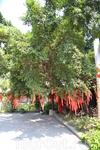 Хуанпу в храме
