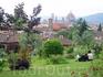 В саду Роз