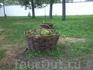 Красивучая корзинка с живыми цветочками)))