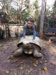 Настоящая черепаха?