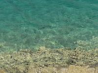 Морские ежи водятся исключительно в чистой воде