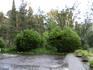 Буйство зелени и дождя