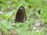 На острове есть Сад бабочек, куда можно попасть, заплатив за вход. Но, если понаблюдать за природой, окружающей тебя, то посещение сада бабочек вовсе не ...