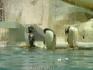 пингвины :)