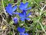 цветы на склонах Малого седл